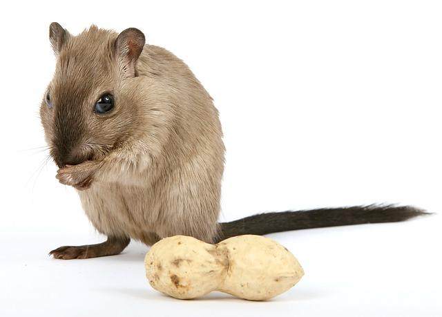 Wieso macht der Hamster im Kinderzimmer nachts Randale?