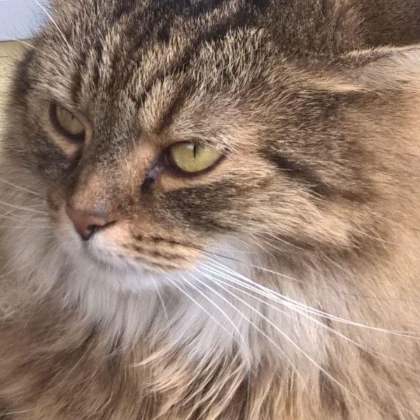 Wie sucht man einen neuen Freund für seine Katze aus?