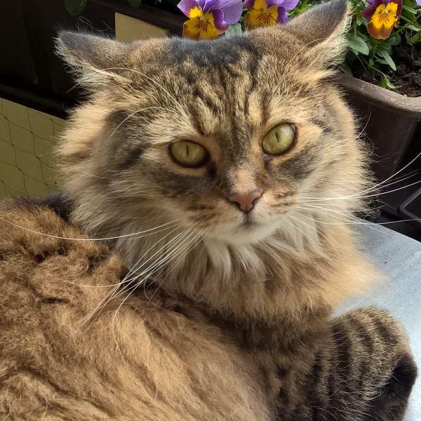 Meine Maine Coon Mix Katze Kira